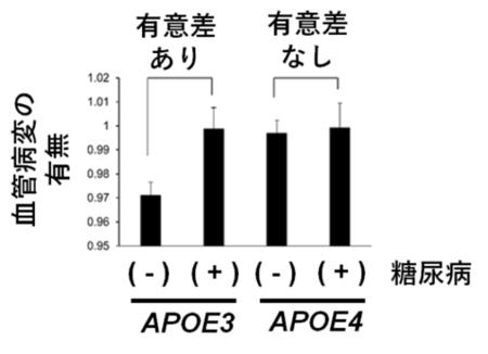 図2.APOE遺伝子型および糖尿病の血管病変への影響