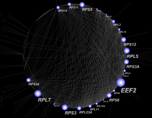 図3. タンパク質間相互作用ネットワーク解析で得られたハブ遺伝子群